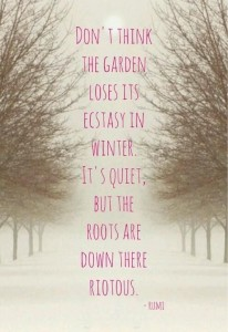 What are your roots like?